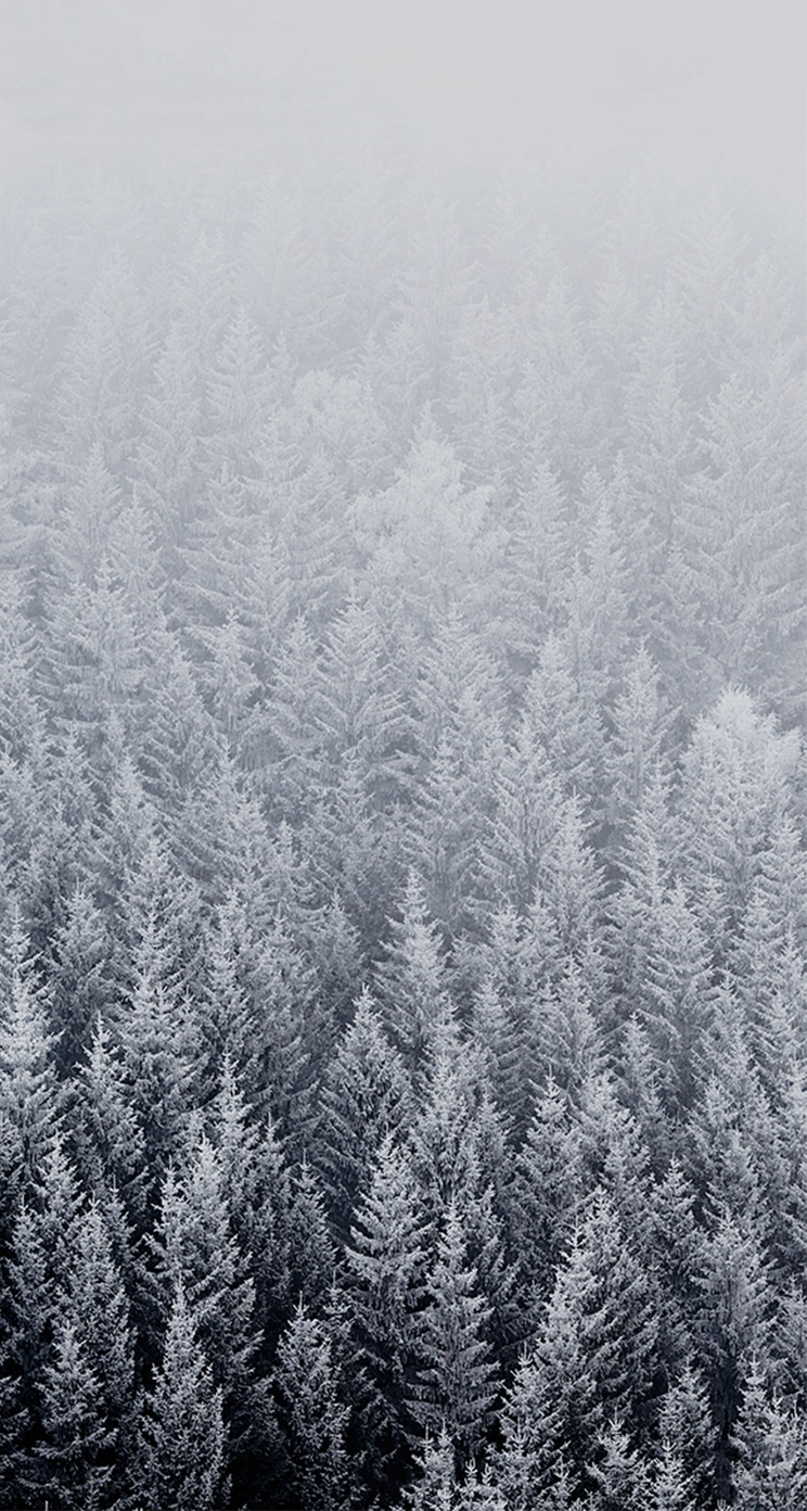 iOS 8 Default Forest Snow Parallax iPhone 5 Wallpaper 744x1392