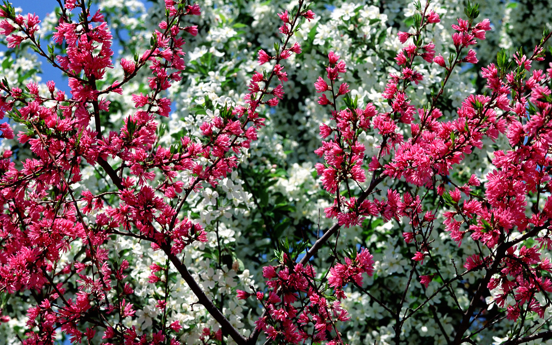 Spring Flowers wallpaper   228108 1920x1200