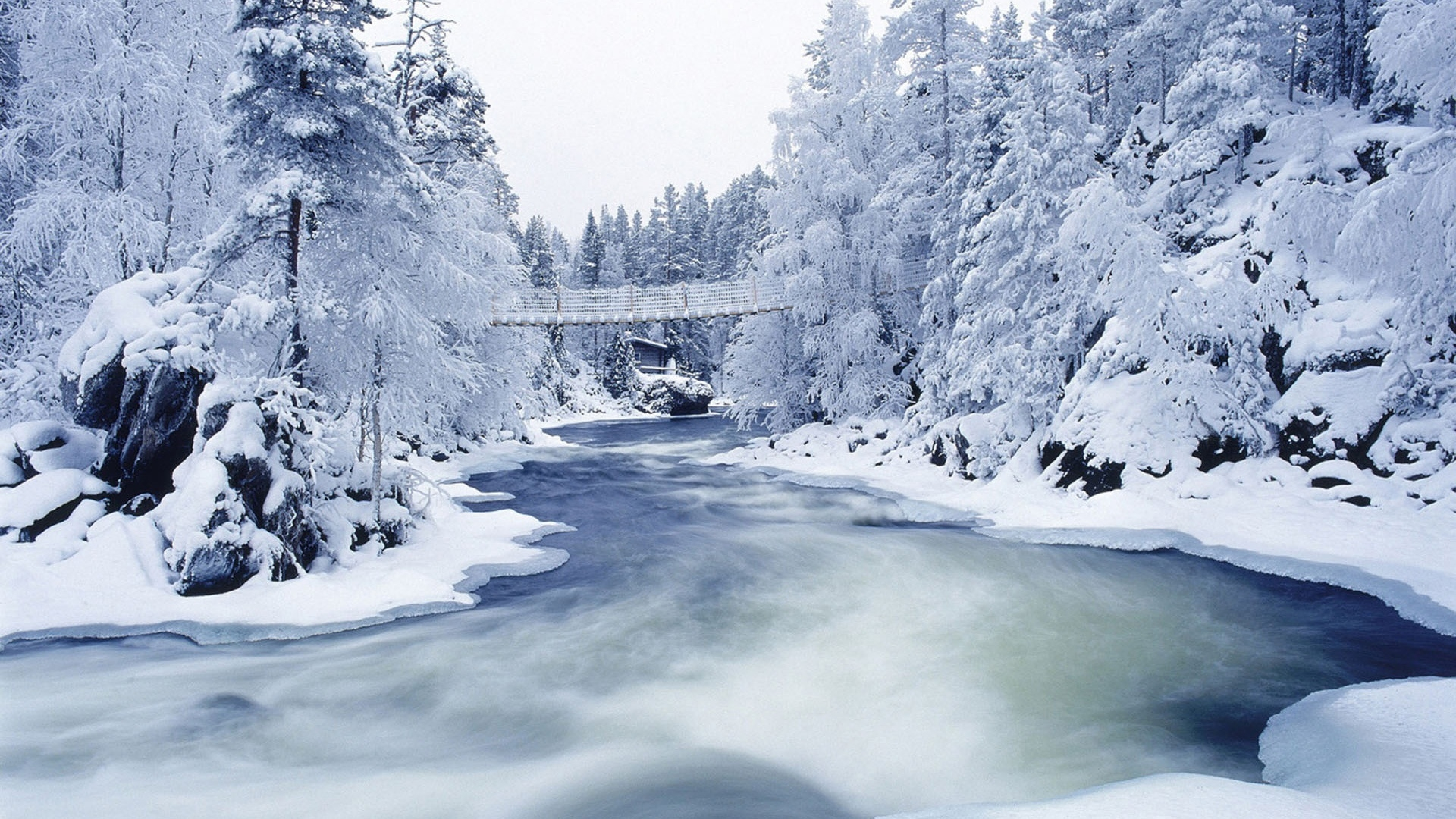Frozen Trees River Wallpapers HD 13393 Wallpaper Wallpaper hd 1920x1080