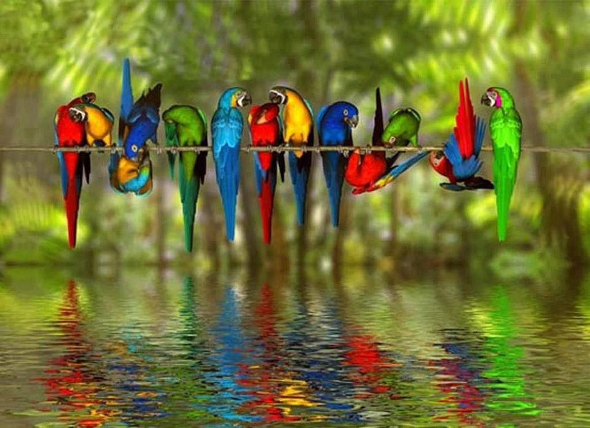 bird screensavers and wallpaper wallpapersafari