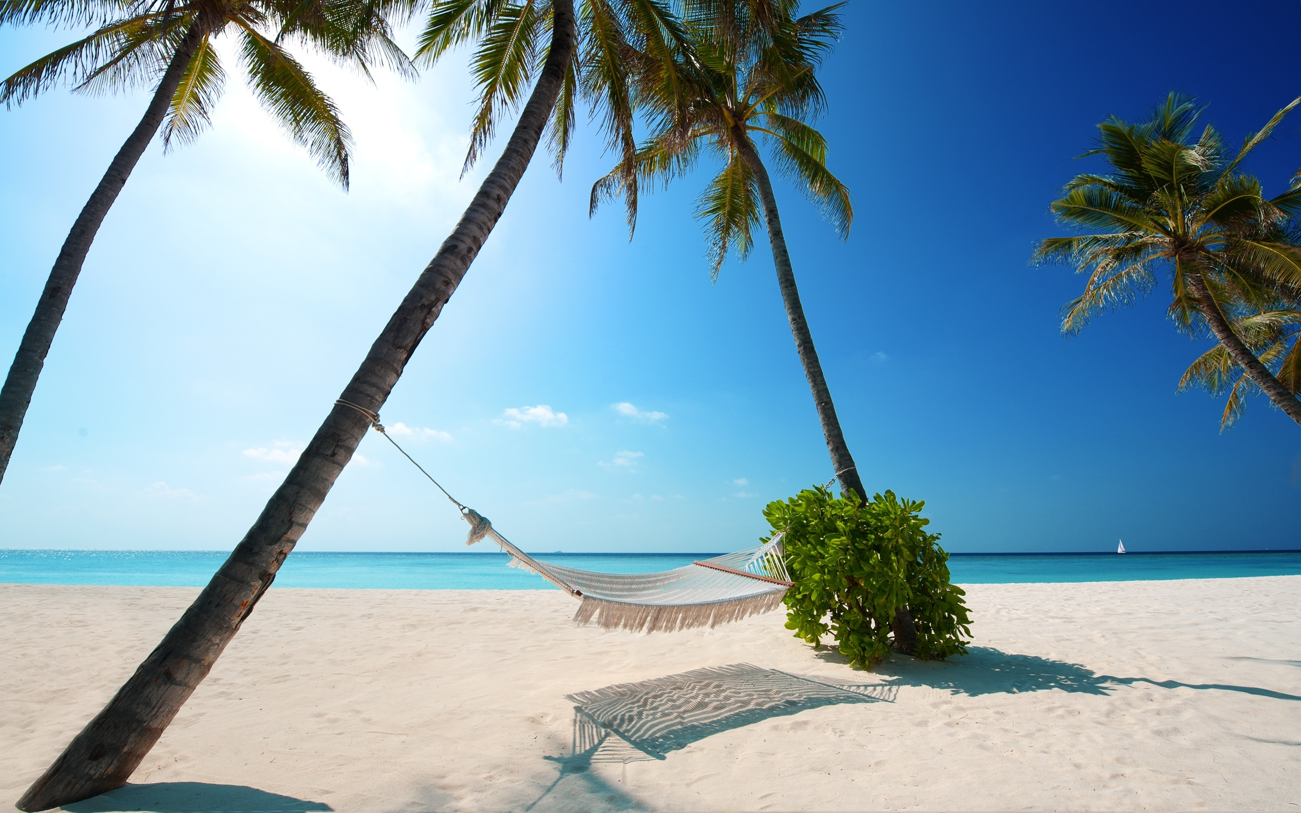 Beach With Hammock Background 1 HD Wallpapers 2560x1600