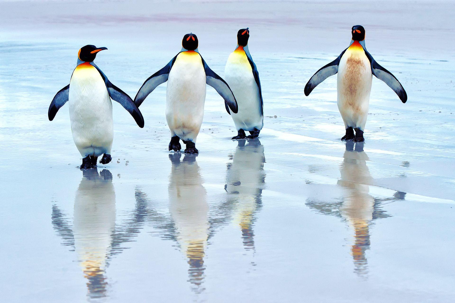 Four Cute Penguin Wallpaper For Windows Ahaa Penguins Penguin 1920x1280