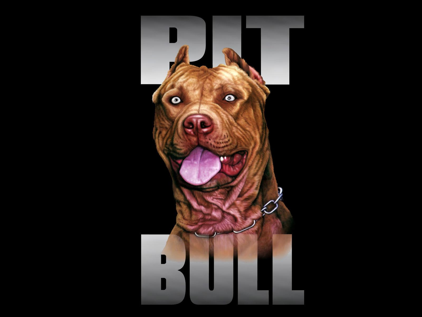 Pit Bull Wallpaper For Computer