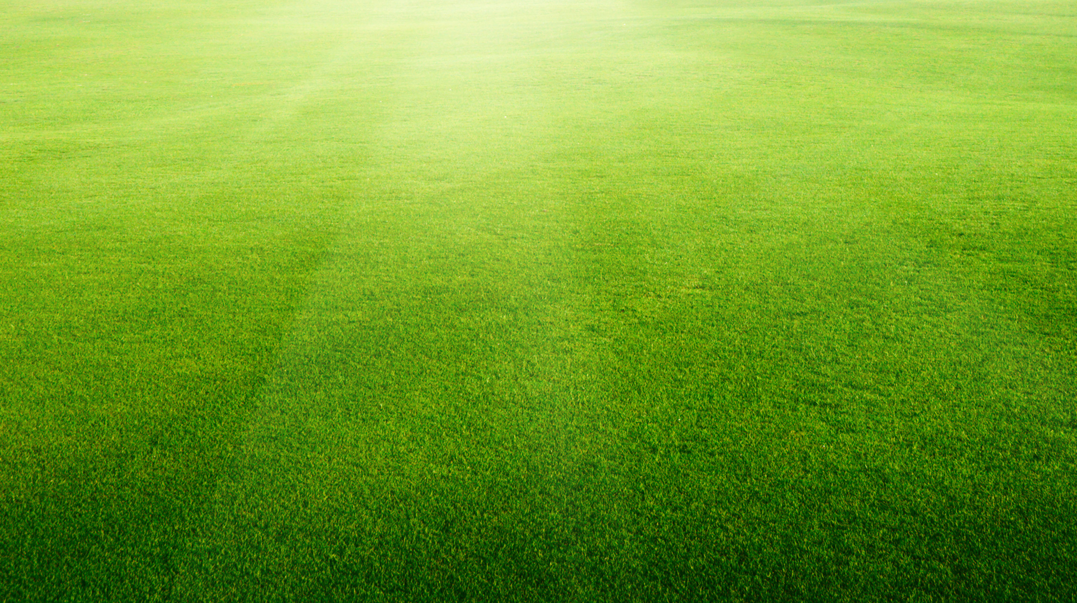 photo Artificial grass background   Lawn Indoor Material 3542x1984
