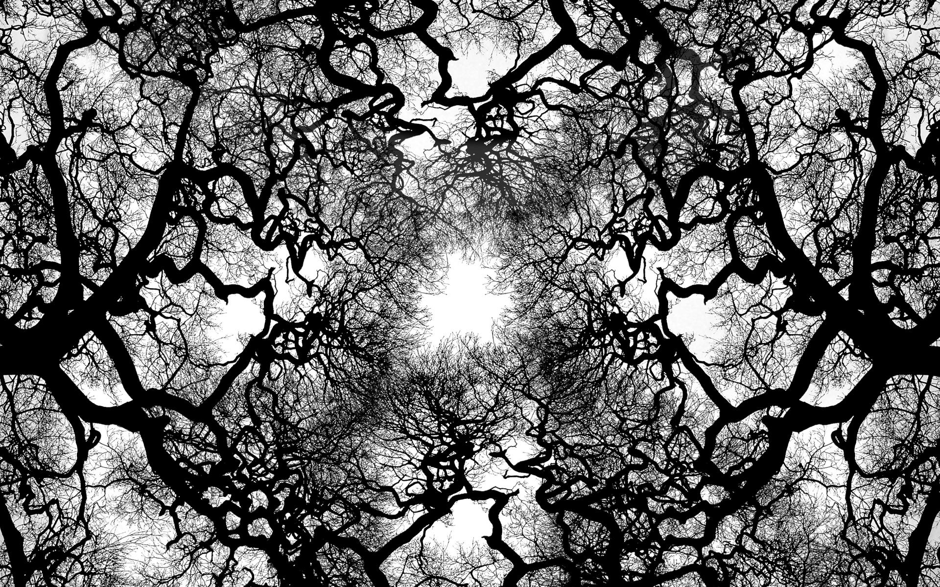 Download Tree Veins Wallpaper 1920x1200 Wallpoper 388899 1920x1200