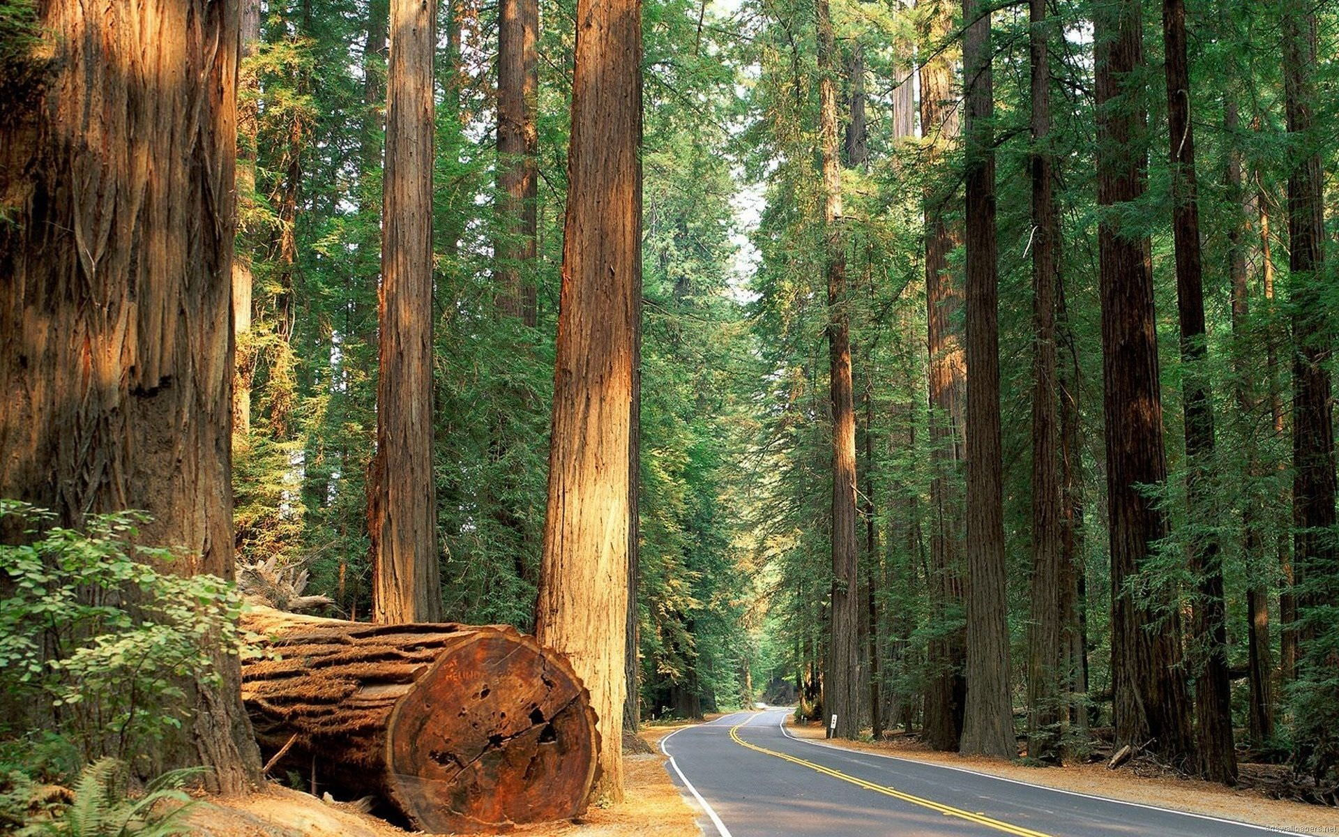 Sequoia National Park Wallpapers In HD Quality   HD Wallpapers Inx 1920x1200