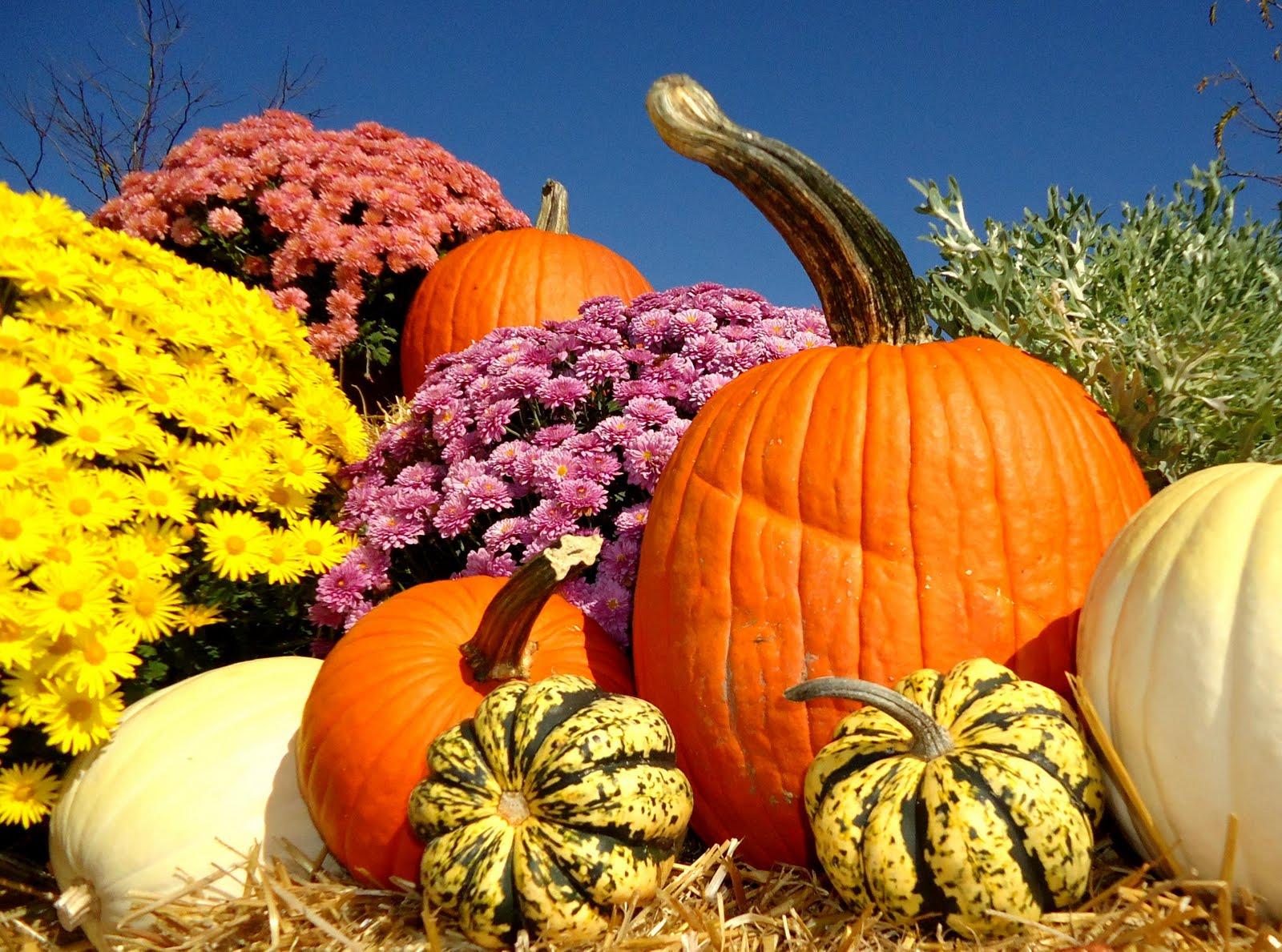 Fall Pumpkins2 1600x1189