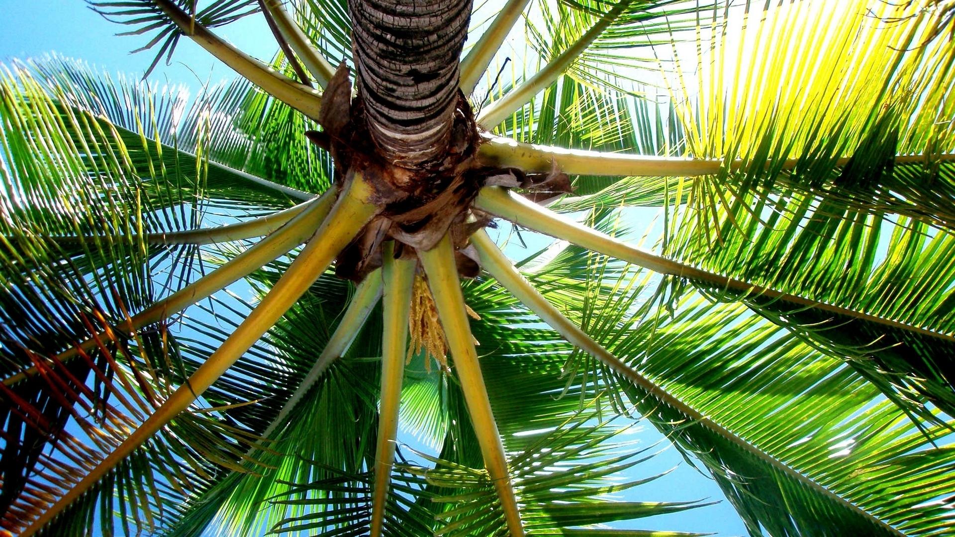 Palm tree wallpaper 27689 1920x1080