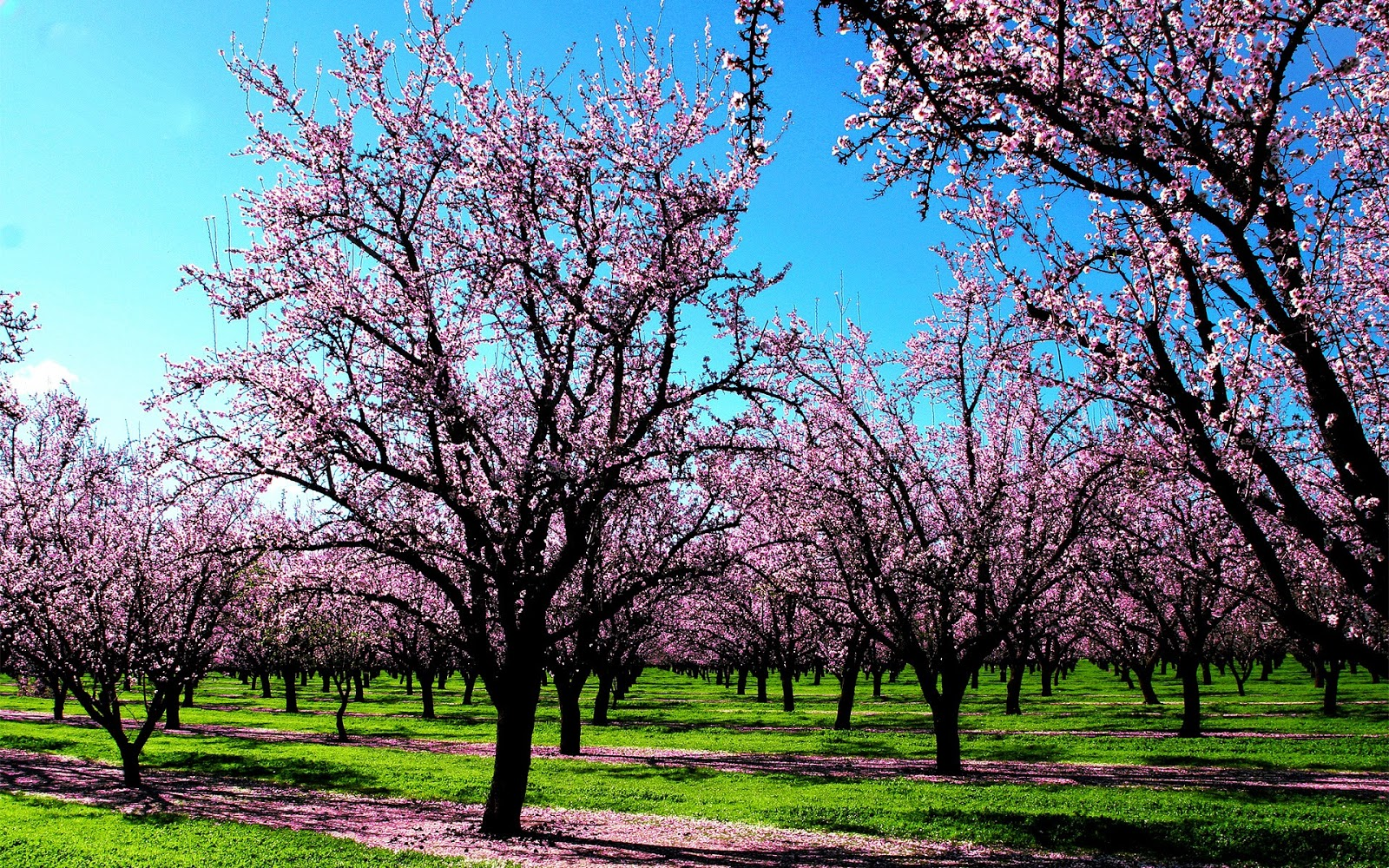 Spring HD Wallpapers Widescreen   Wallpapers 1600x1000