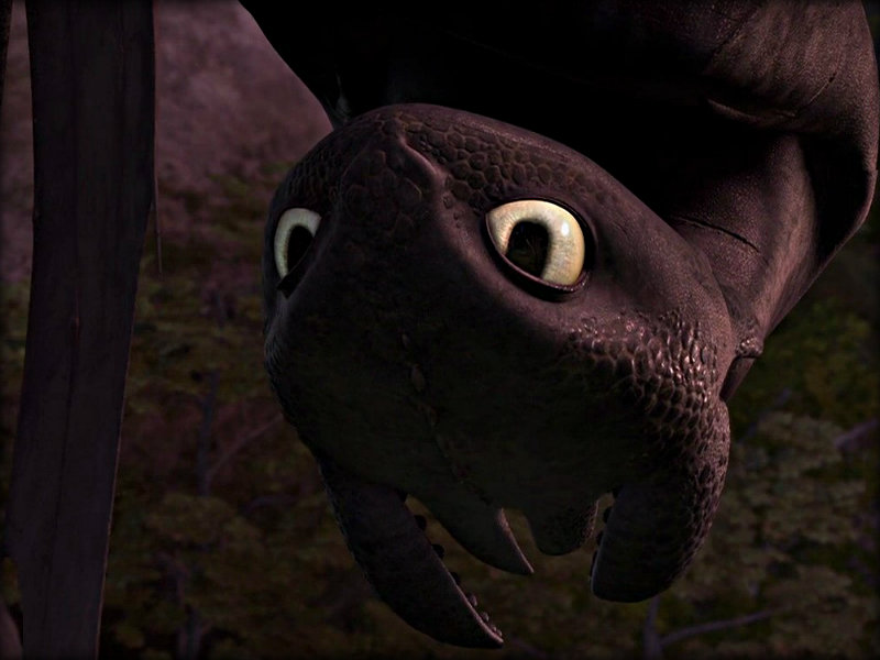 Toothless   Toothless the Dragon Wallpaper 32987038 800x600