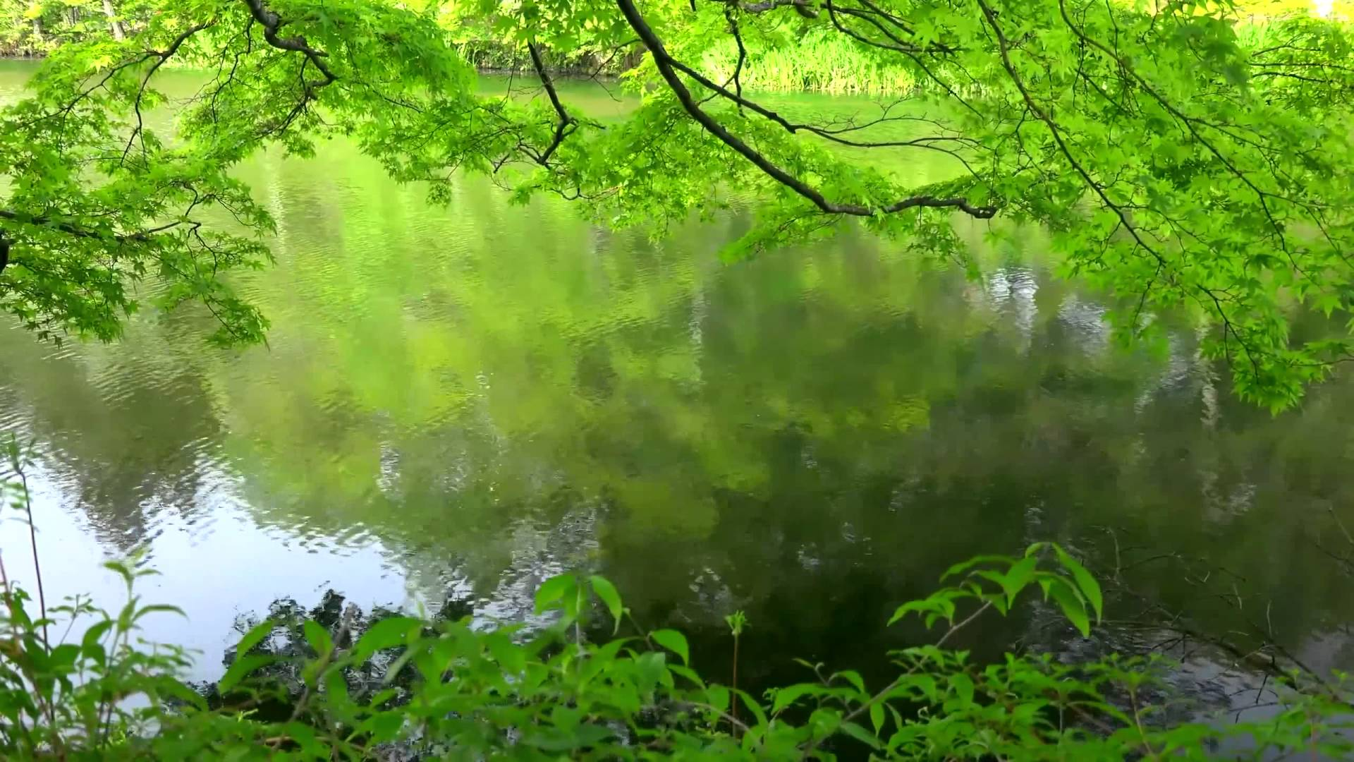 Amazing Nature 6   Video Background HD 1080p 1920x1080