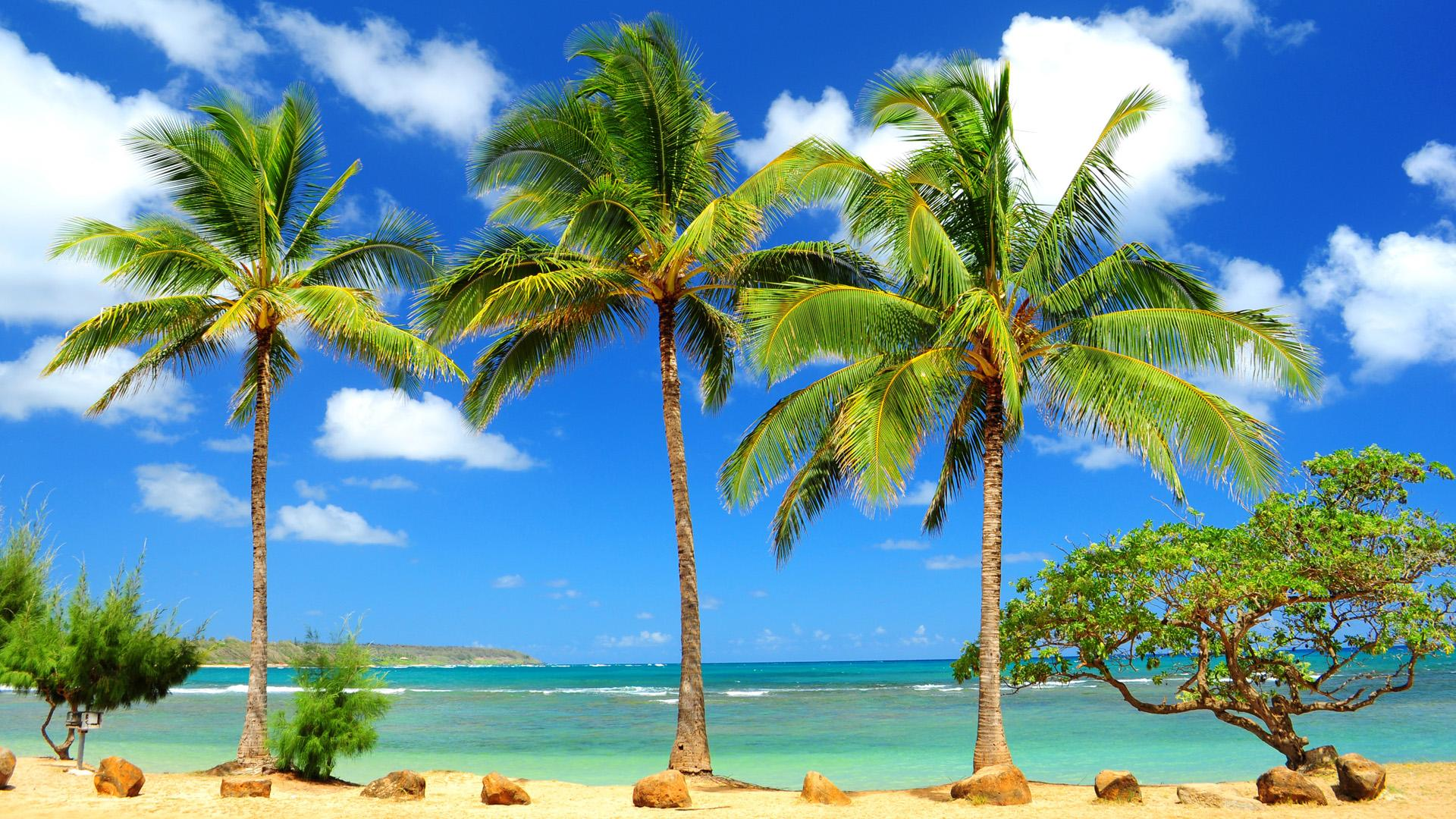 Caribbean Beach Wallpapers   My Wallz   Wallpapers to 1920x1080