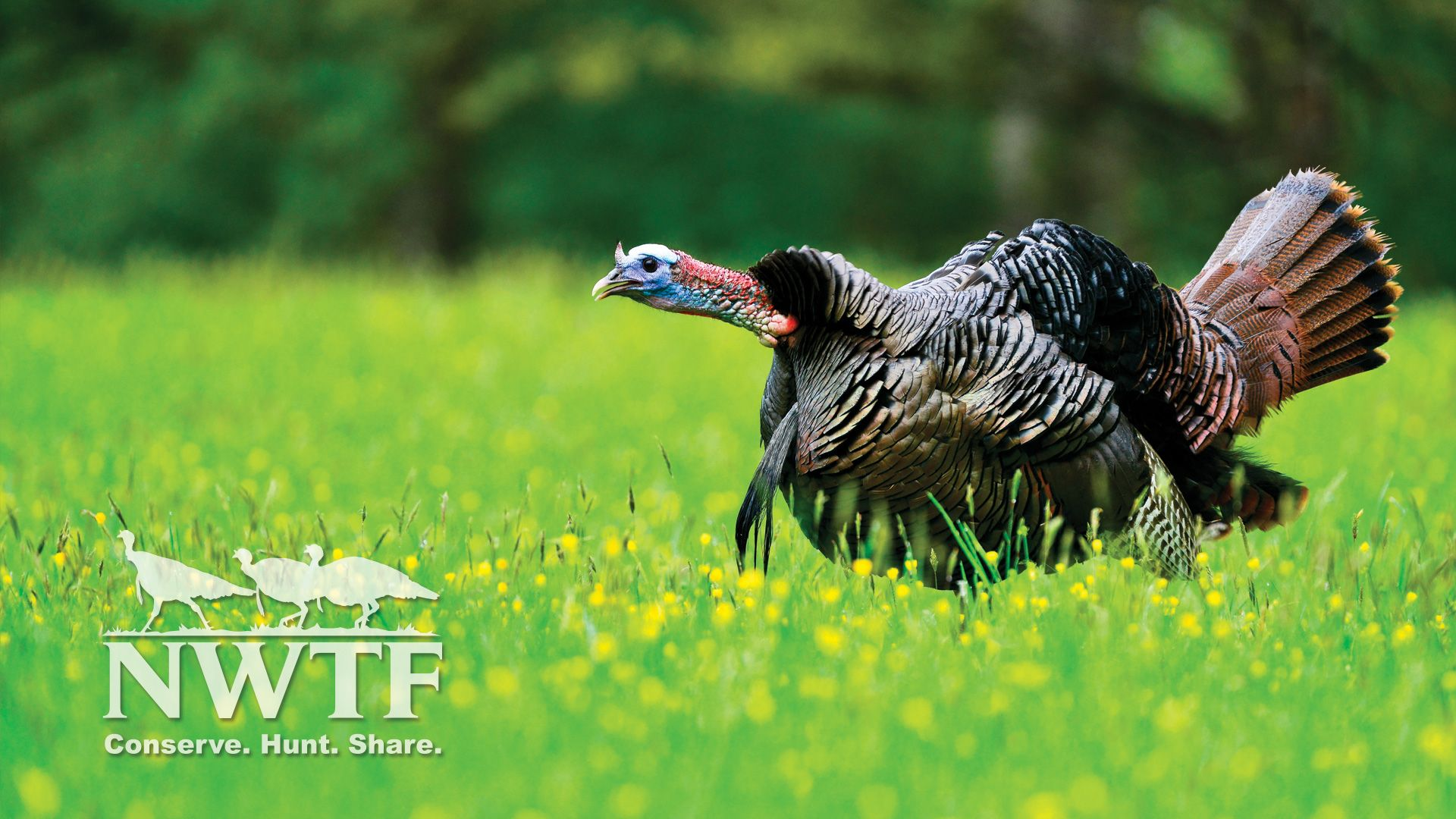Turkey Hunting Wallpapers   Top Turkey Hunting Backgrounds 1920x1080