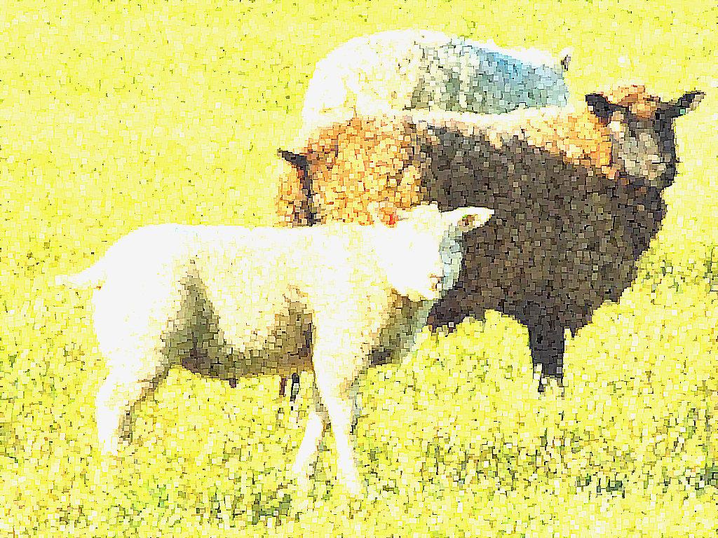 Free Download Sheep Lamb Photos Desktop Backgrounds Wallpaper 1024x768 For Your Desktop Mobile Tablet Explore 41 Lamb Desktop Wallpaper Lamb Of God Wallpaper Easter Lamb Wallpaper Lion And Lamb Wallpaper