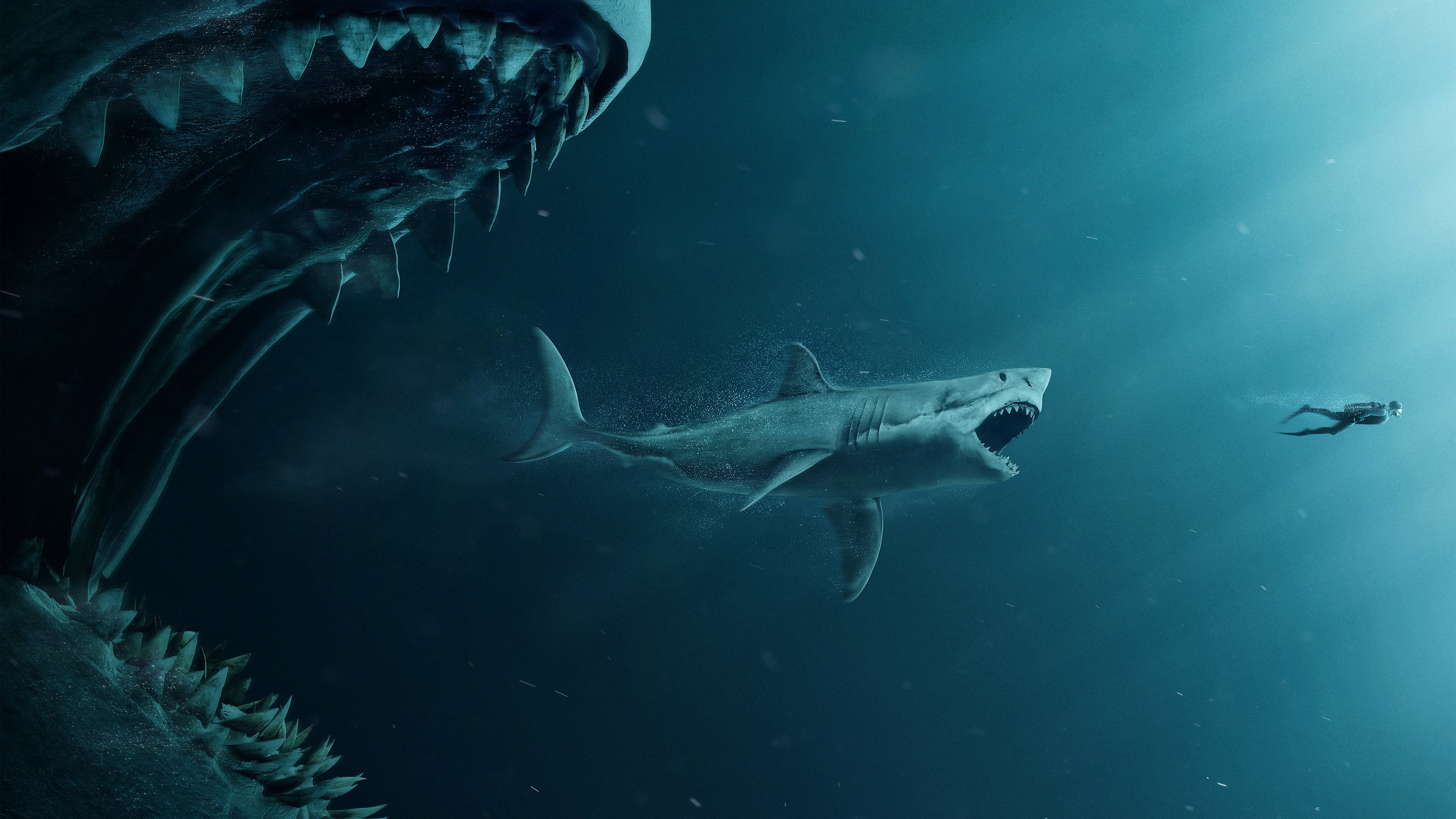 Shark 4K wallpapers for your desktop or mobile screen and 3840x2160