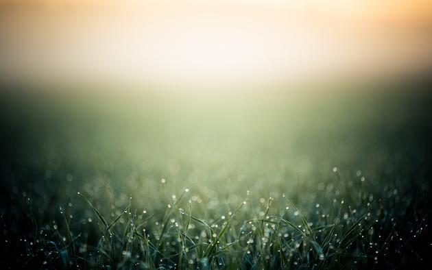 Daily Wallpaper Morning Grass 630x394