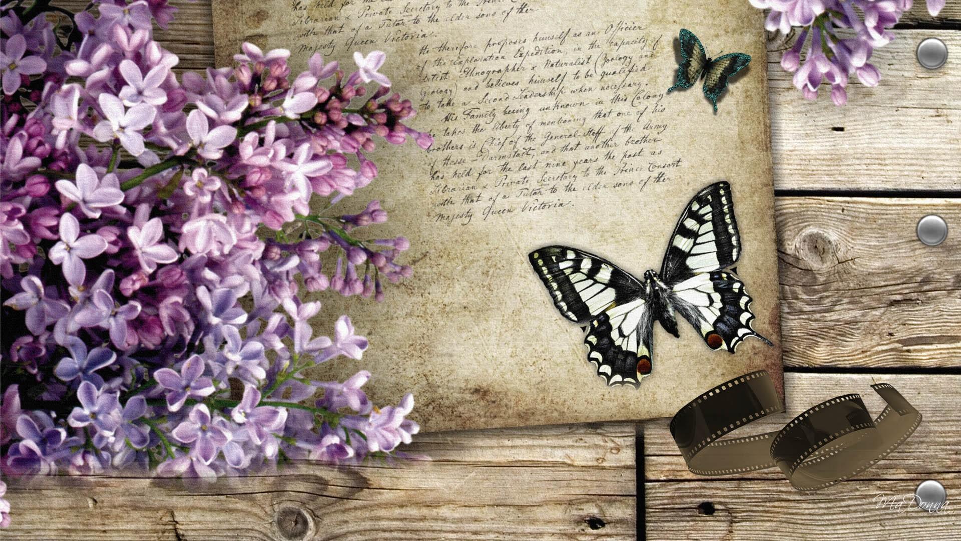 Vintage Butterfly Wallpaper   Widescreen HD Wallpapers 1920x1080