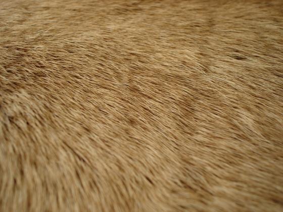 Magazines 24 Fur wallpaper fur fabric bedroom wallpaper 560x420