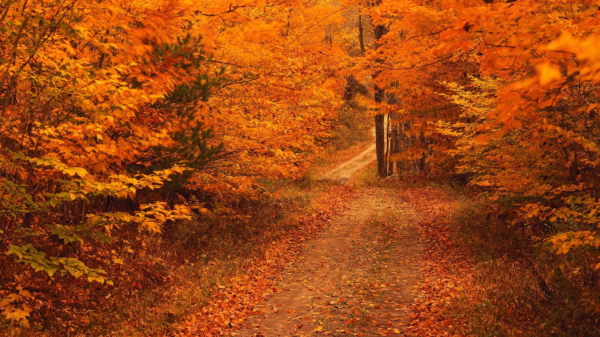 Fall Season Desktop Backgrounds Desktop Image 1920x1080