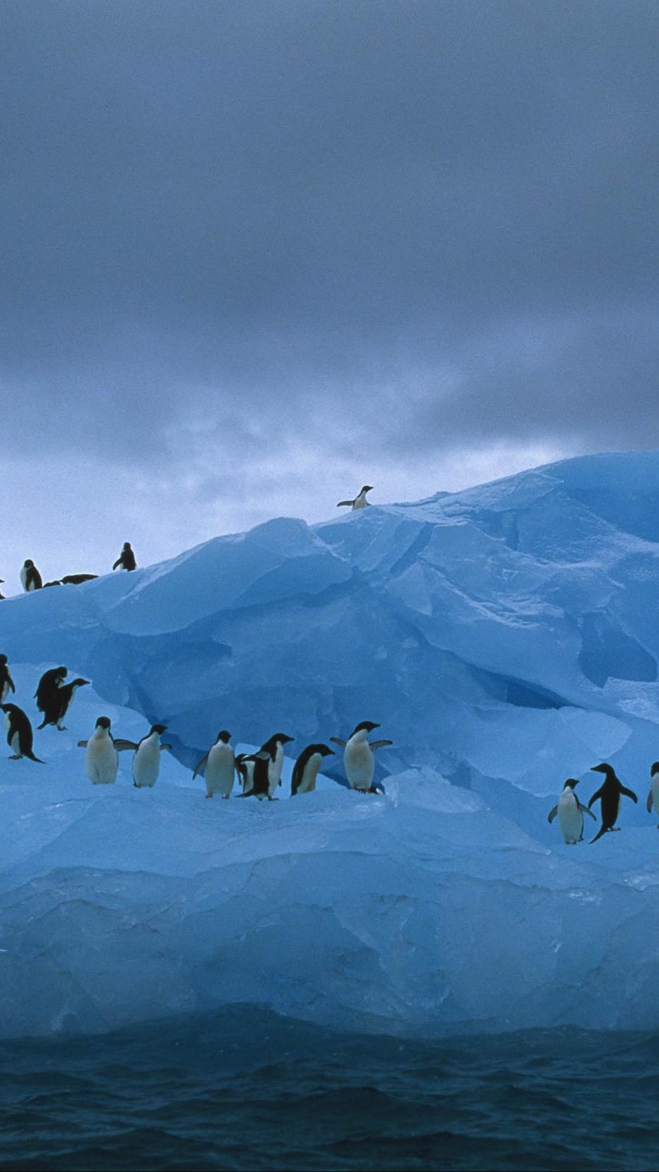 Download wallpaper 938x1668 penguins iceberg ocean iphone 876s 938x1668
