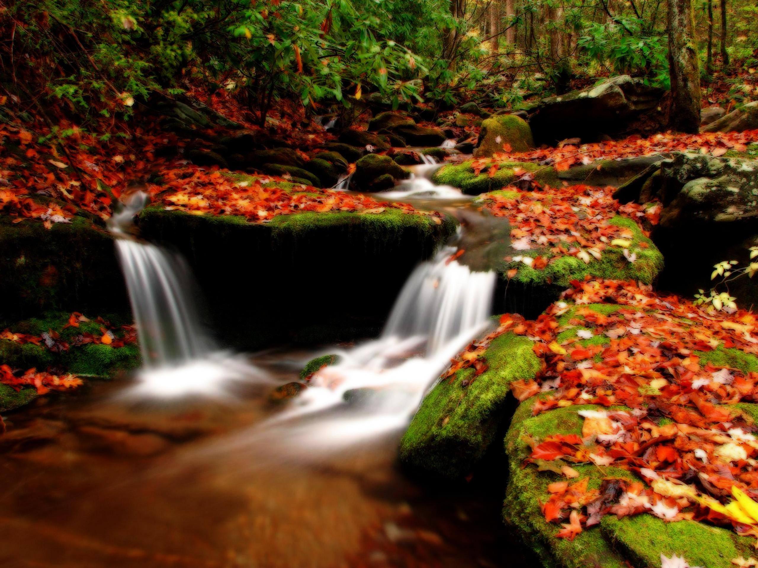 high definition wallpapercomphotoanime autumn wallpaper12html 2560x1920