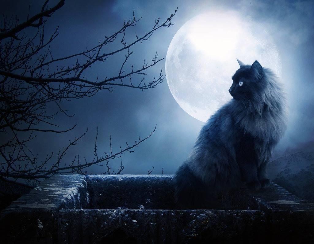full moon black cat   Wallpapers Wallpaper 1024x798