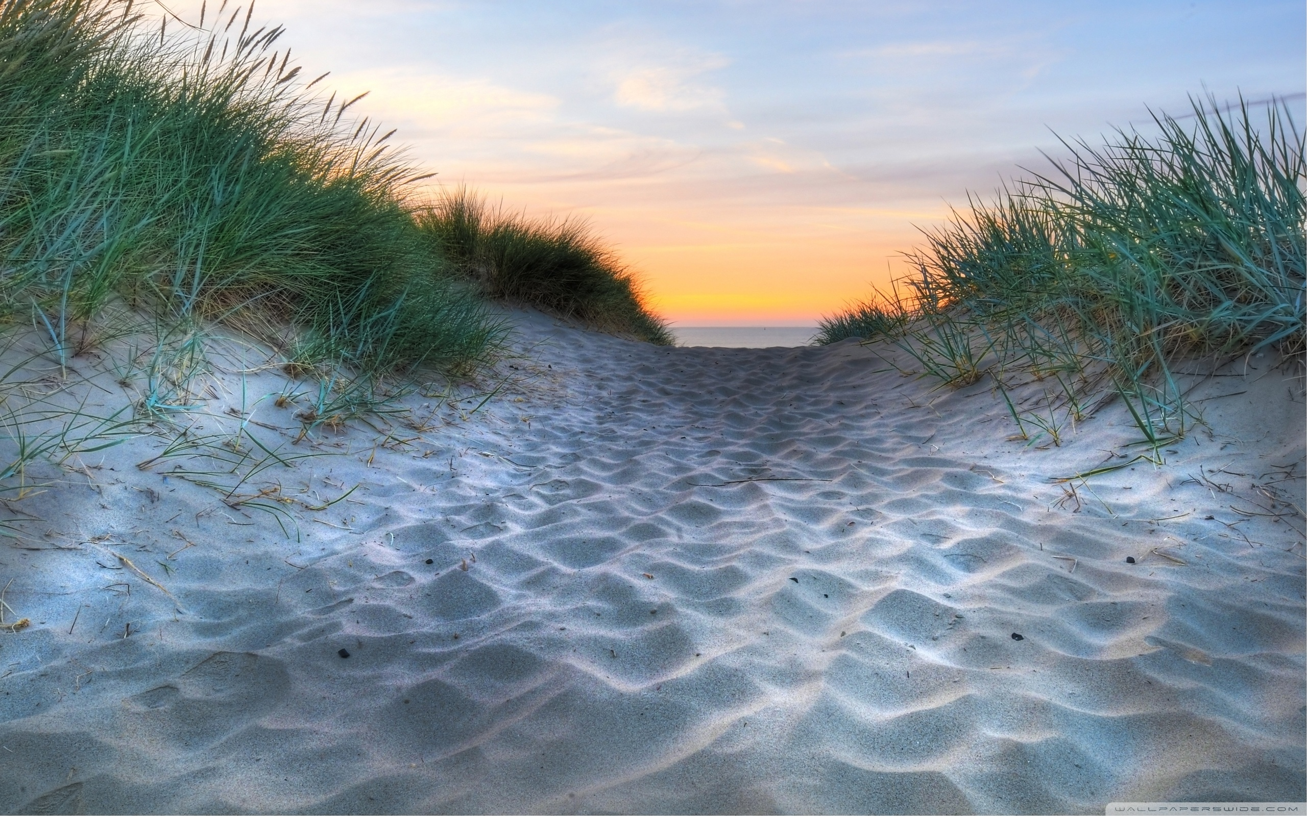 Beach Vegetation 4K HD Desktop Wallpaper for Dual Monitor 2560x1600