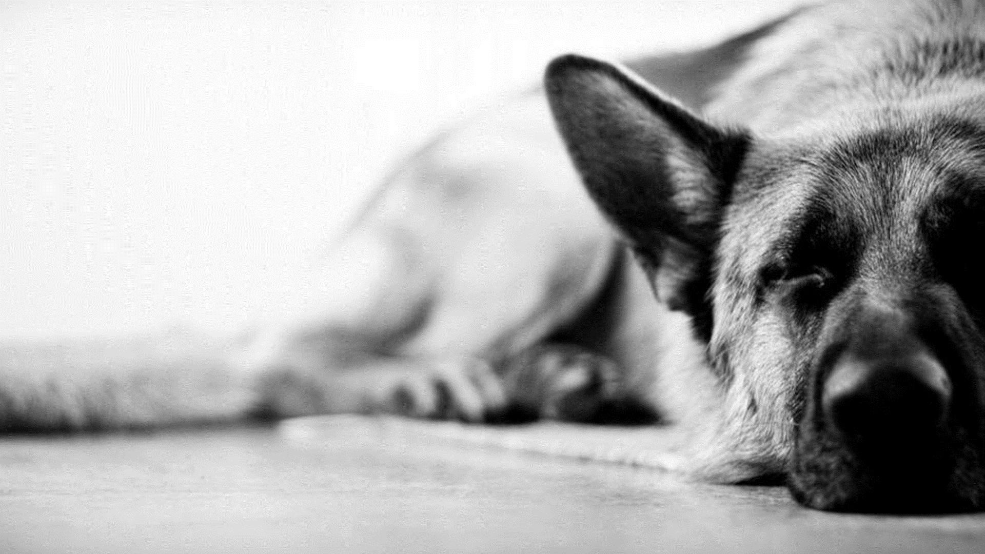Черно-белый пес на полу  № 1157266 без смс
