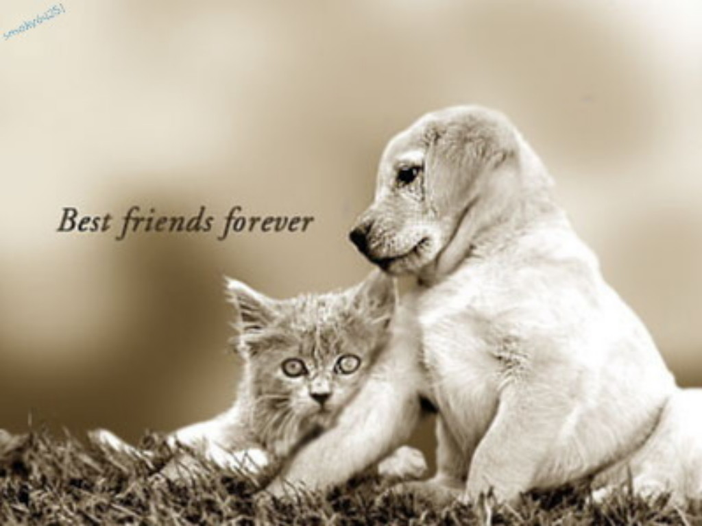 Best Friends Forever Wallpaper Yvt2 1024x768