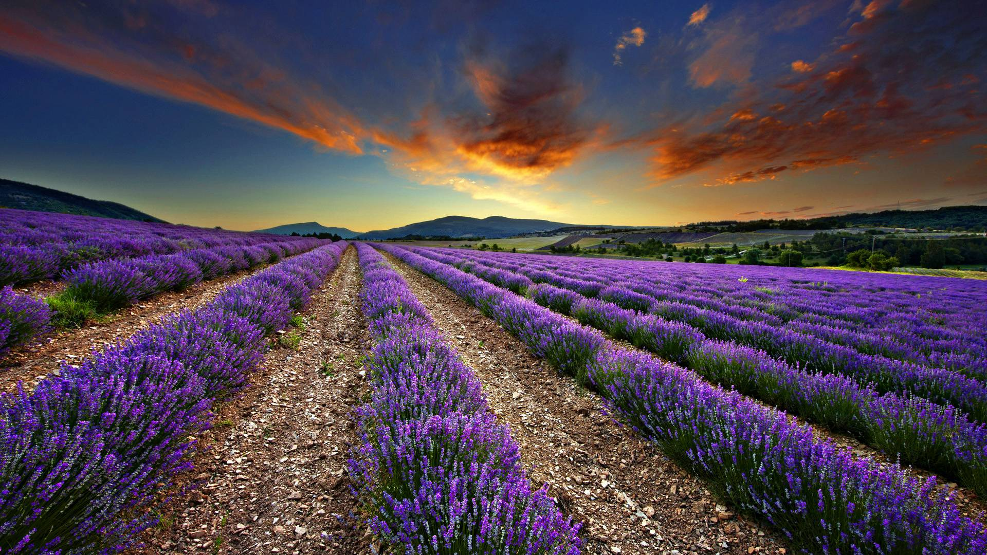 Lavender Wallpapers 1920x1080