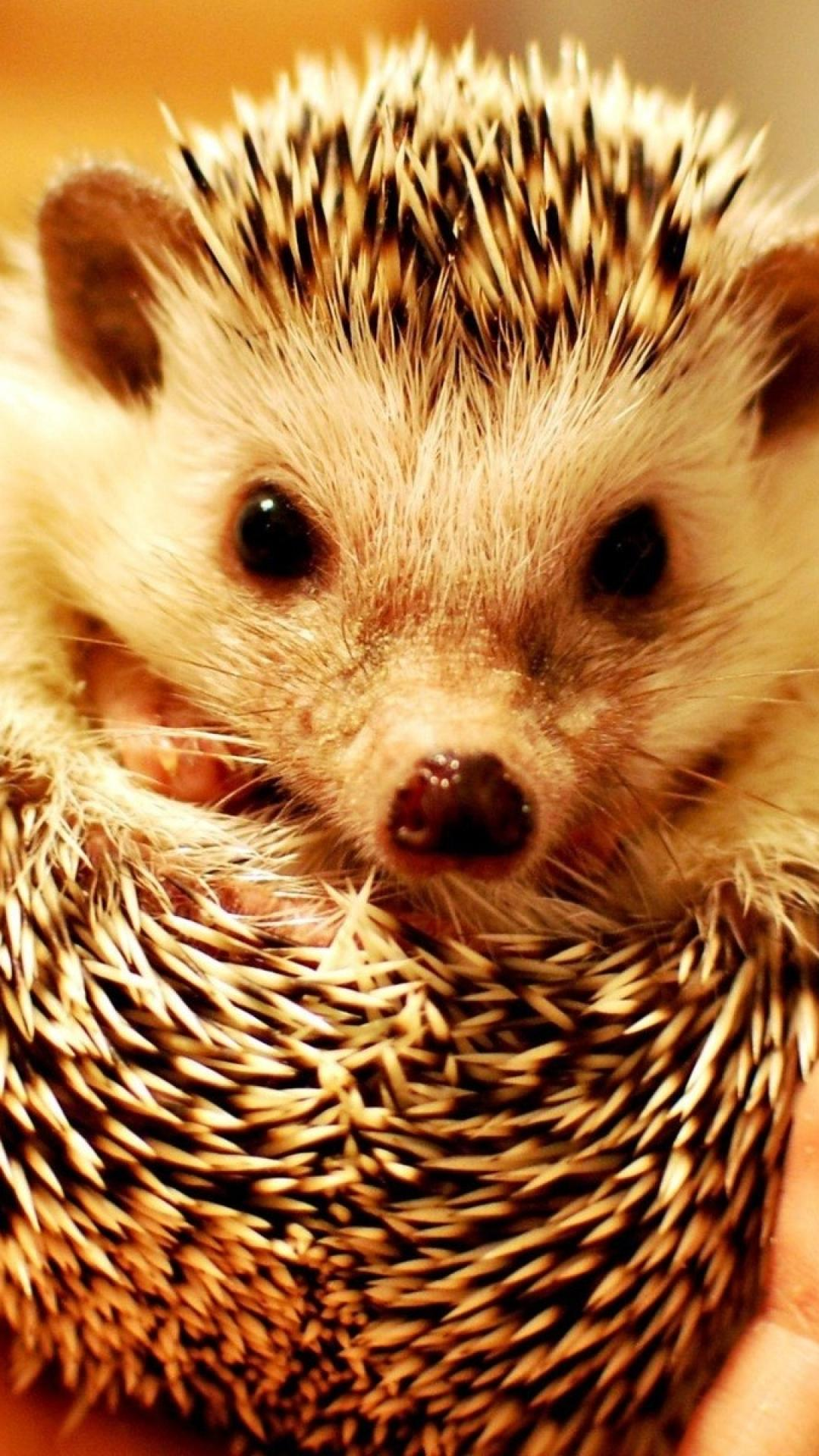 Very Nice Wallpaper For Desktop Cute Hedgehog Wallpape...