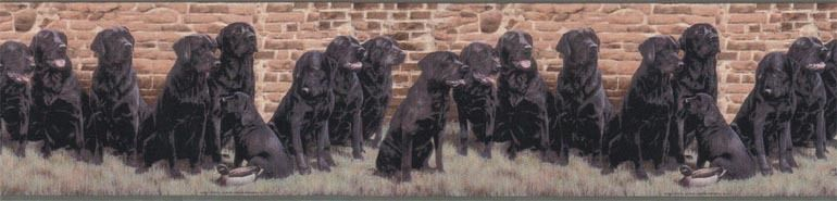 Labrador Black Lab Retrievers Hunting Dog Police Dog Wallpaper Border 770x185