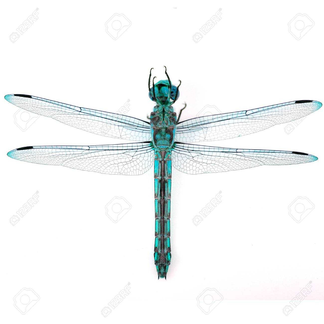 Beautiful Dragonfly On White Background Stock Photo Picture And 1300x1300