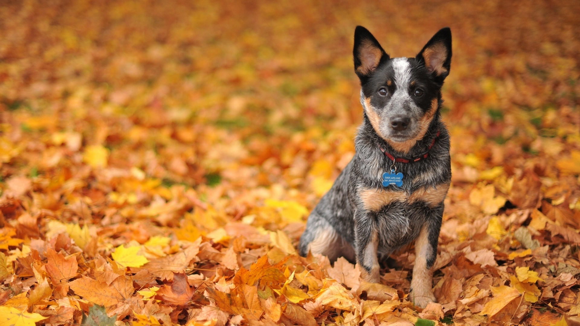 47+] Free Fall Wallpaper with Dogs on WallpaperSafari