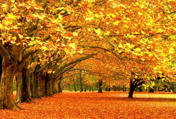 Wallpaper tree leaf park oak desktop wallpaper Nature GoodWP 590x400