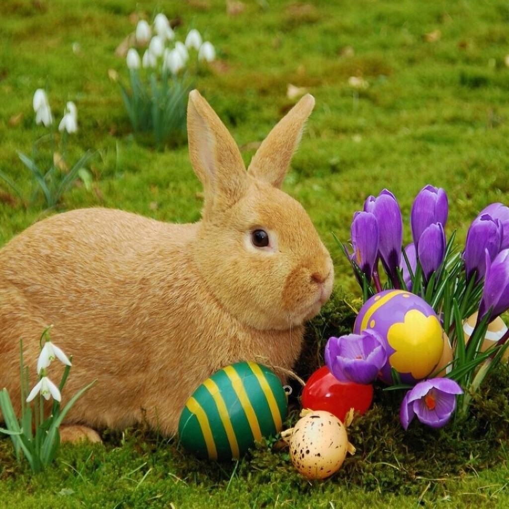 easter bunny HD Wallpaper 6743 1024x1024