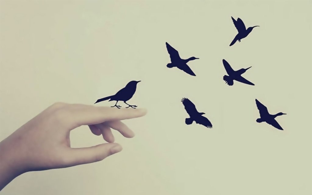 Birds Wallpaper Tumblr [wallpaper] fly birds by 1024x640