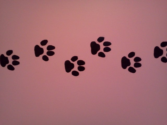 46+] Paw Print Wallpaper for Walls on