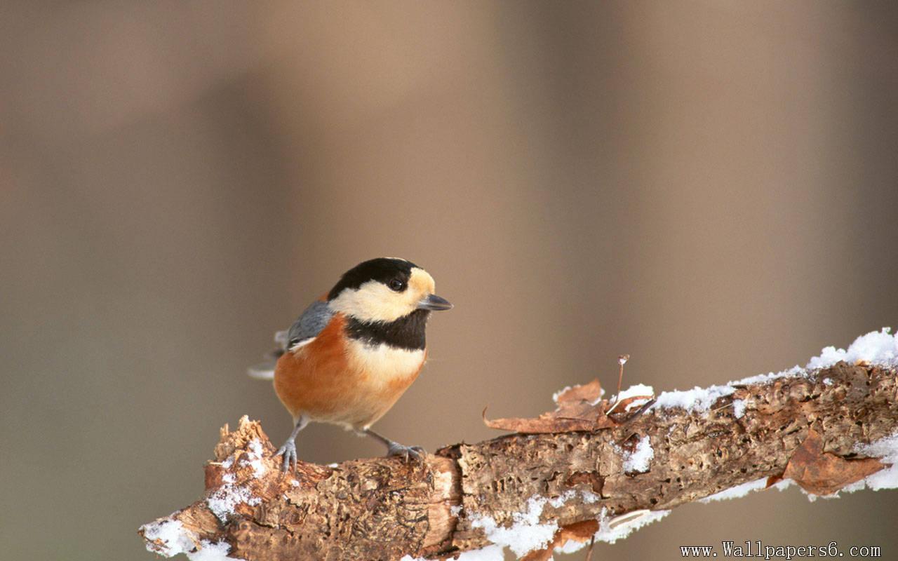 wallpapers a bird in winter a bird in winter wallpapers download 1280x800