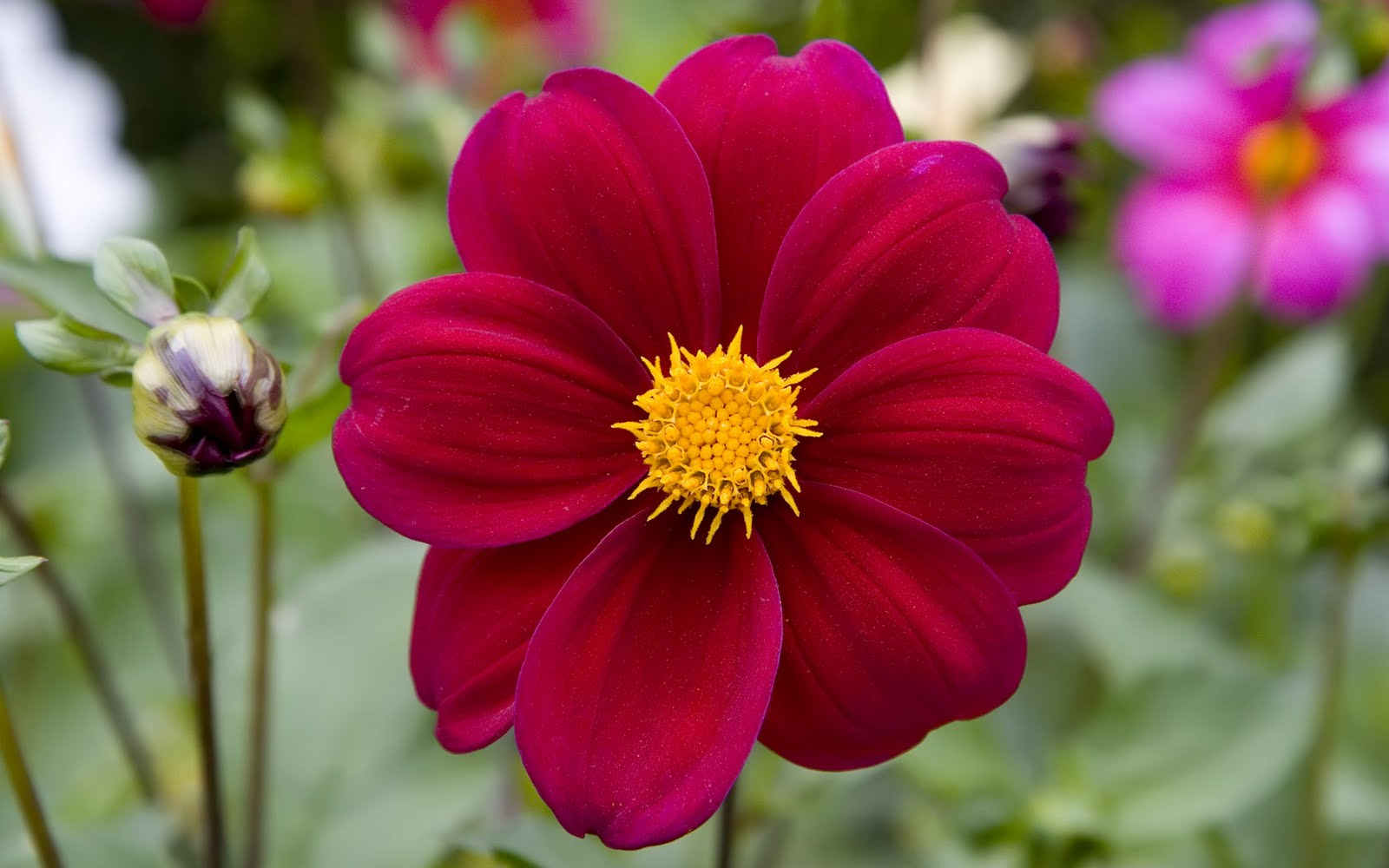 Natural Flower Picture for Wallpaper - WallpaperSafari  Images Of Nature And Flowers
