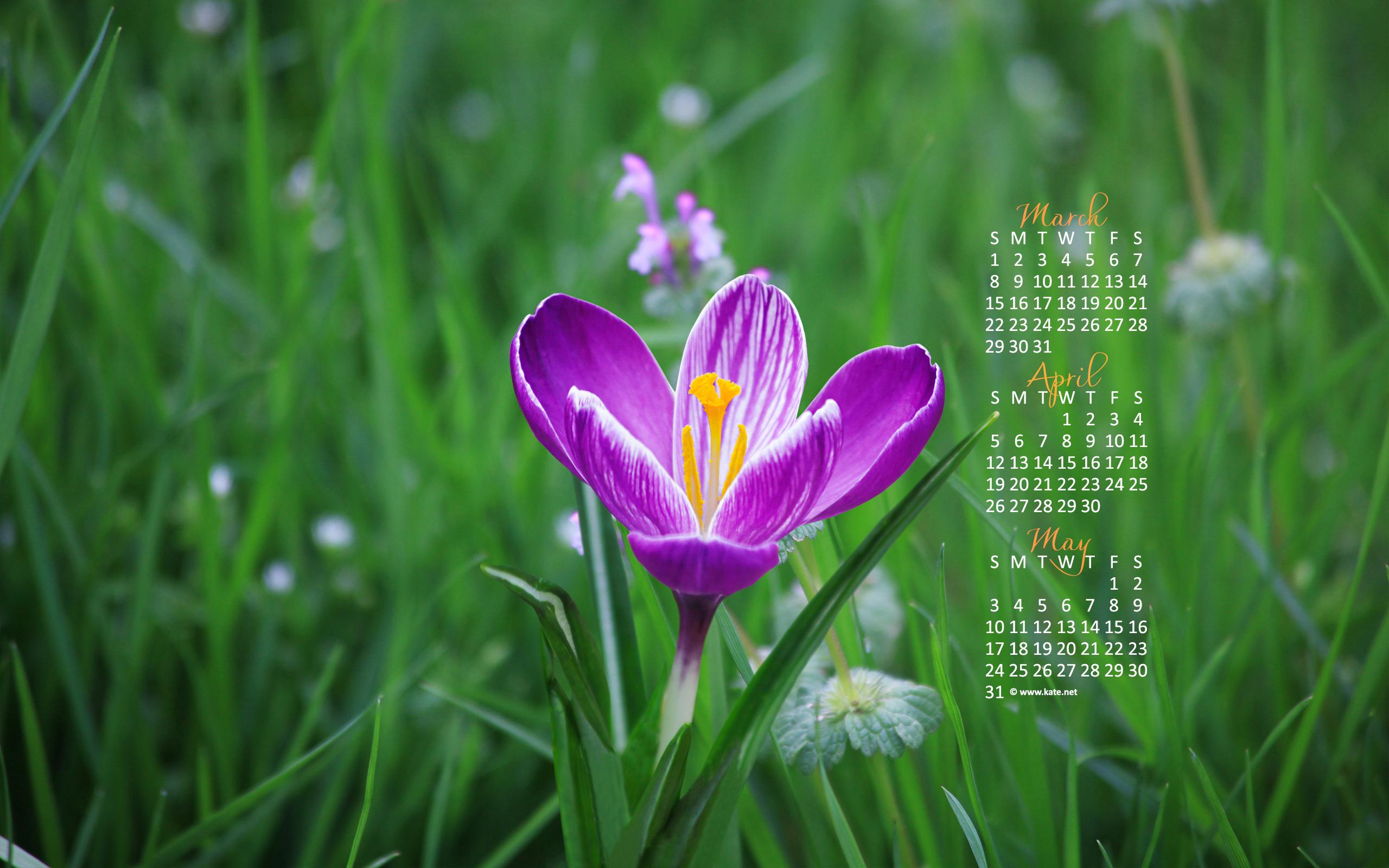 Kate Net Free Calendar Wallpapers WallpaperSafari