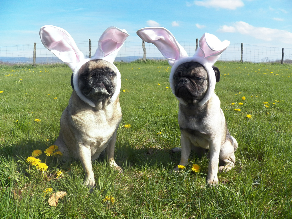 And I couldnt help but throw the Pug Bunnies in there too 1024x768