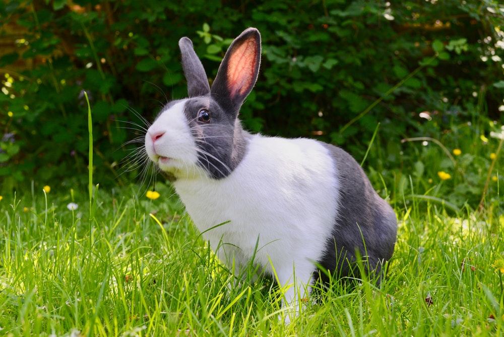26 Wallpaper Of Rabbit On Wallpapersafari