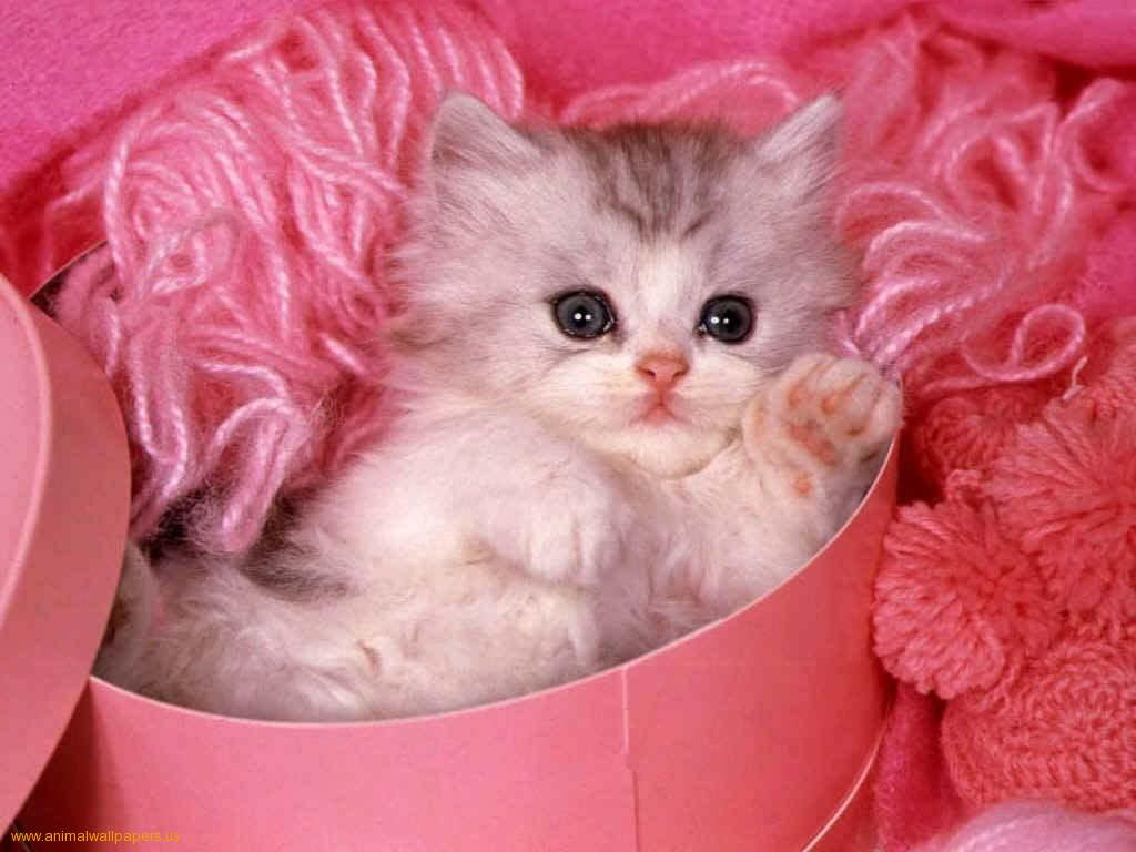 Wallpaper download cute - Wallpaper Download Cute Download Cute Kitten Wallpaper Pictures In High Definition Or