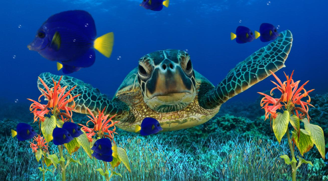 Download Now Coral Reef Aquarium Animated Wallpaper 1309x724