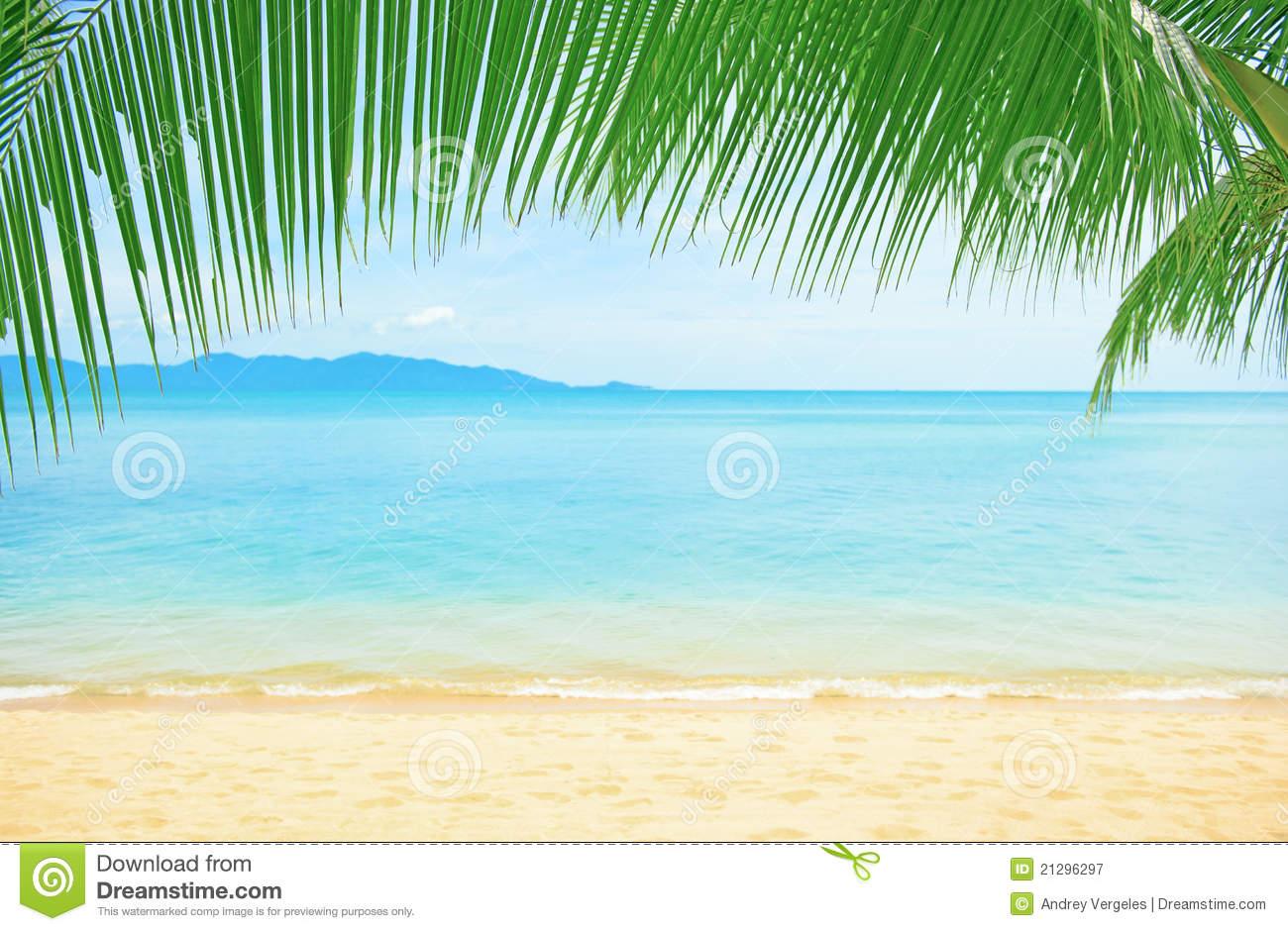 definition wallpapercomphotobeautiful palm tree wallpaper41html 1300x940