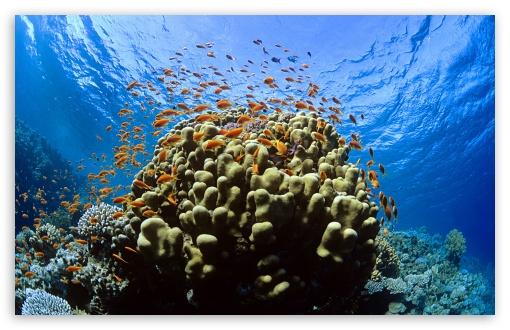 Tropical Reef Fish HD wallpaper for Standard 43 54 Fullscreen UXGA 510x330