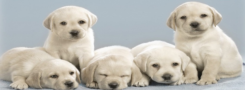 Cute Puppies Fb Cover   Facebook Covers Timeline Covers Facebook 851x315