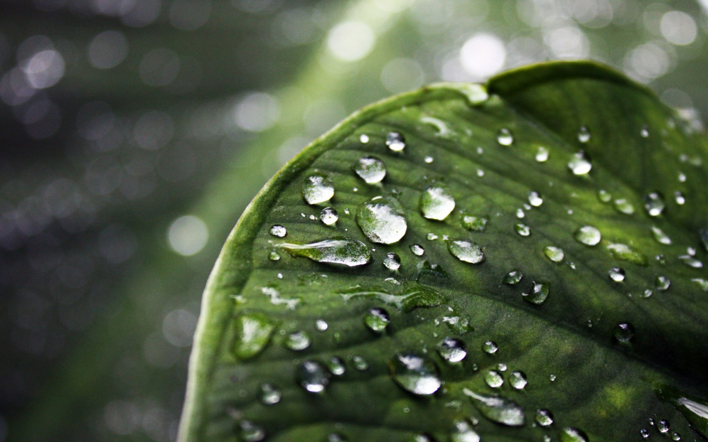 wallpaper desktop nature rain 3d   Wallpapers 1440x900