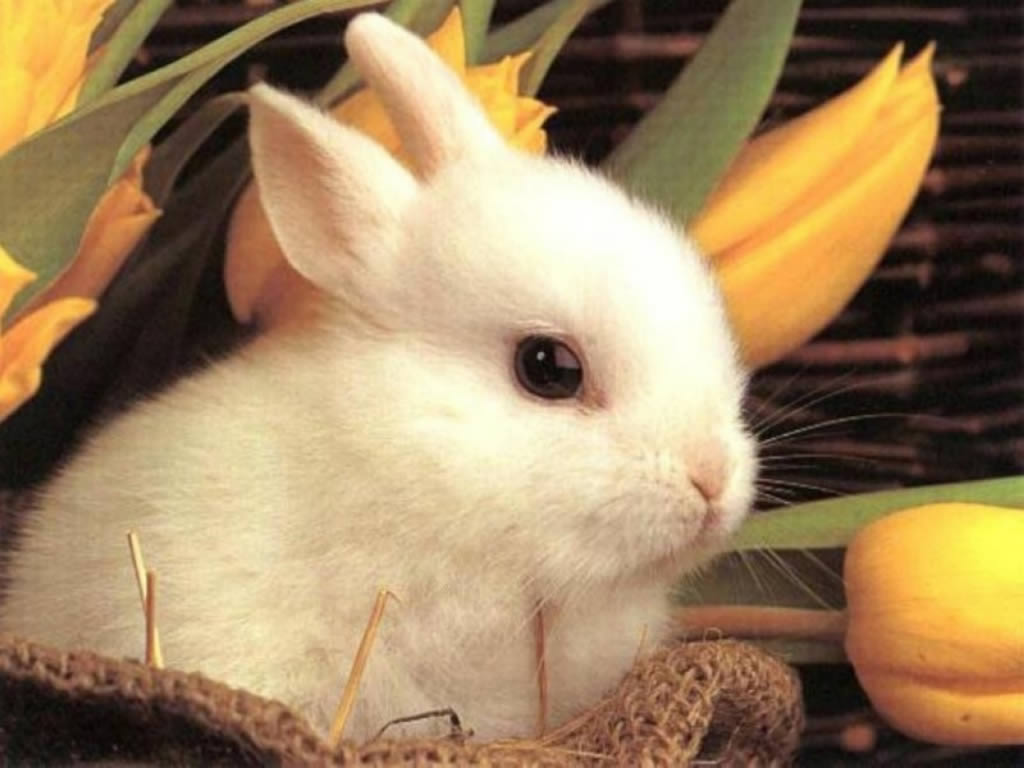 30 Magnificent Easter Exclusive Bunny Wallpapers Multy 1024x768